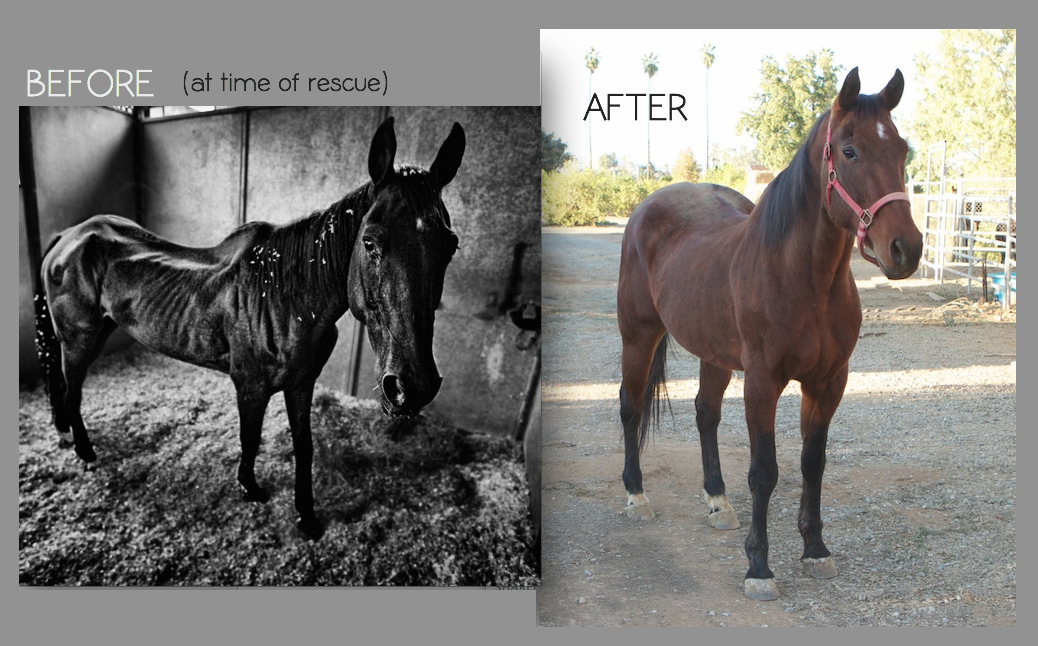 before-after-horse-01